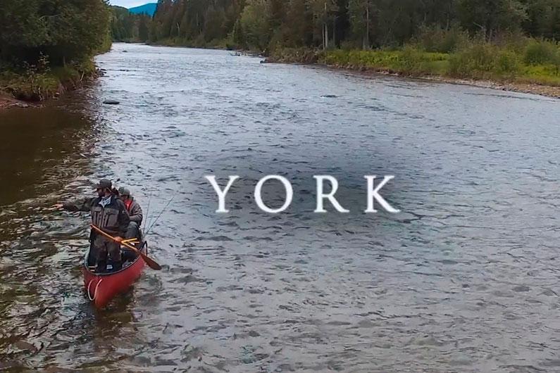 York: film gagnant du PALM 2019