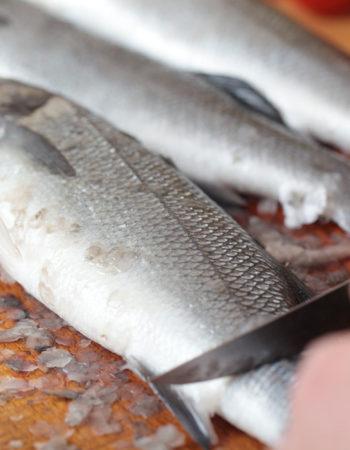 Gros plan sur des poissons qui s'apprêtent à être vidés et apprêtés.