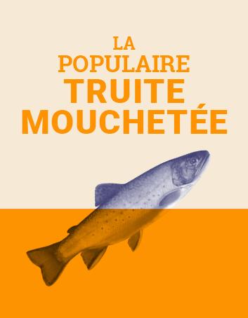 La populaire truite mouchetée